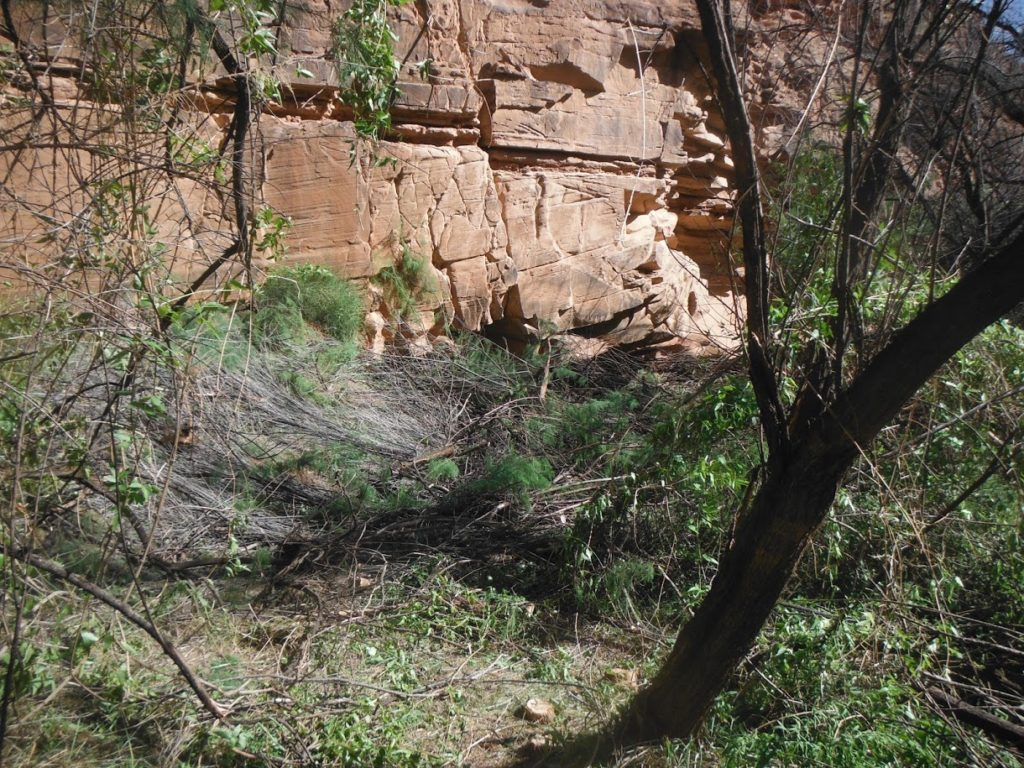 Overgrowth and brush from invasive species have clogged the Colorado River Watershed